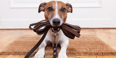 What Is the Best Flooring for Dogs?, Bend, Oregon