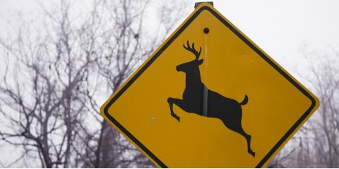 How to Protect Your Car During Deer Season, Frankfort, Michigan