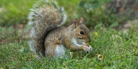 A Guide to Squirrel Infestations, Concord, Alabama