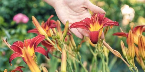 The 5 Best Flowers to Grow in Ohio, Bethel, Ohio
