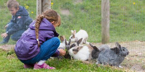 4 Diet Recommendations for Rabbits, Bethel, Ohio