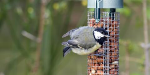3 Helpful Tips for Attracting Feathered Friends With Wild Bird Feed, Bethel, Ohio