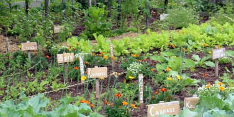 3 Tips to Pick the Right Seeds for Your Garden, Bethel, Ohio