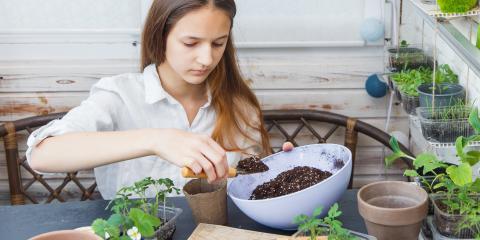 How to Start a Vegetable Garden Inside, Bethel, Ohio