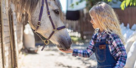 5 Perfect Snacks for Your Horse, Bethel, Ohio