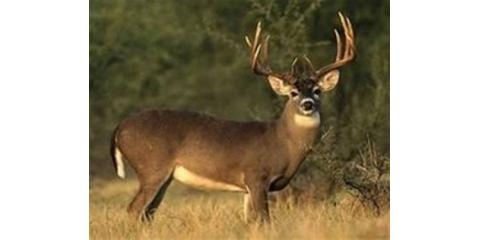 BIG BUCK CONTEST $4000 in Prizes, Clifton, Texas