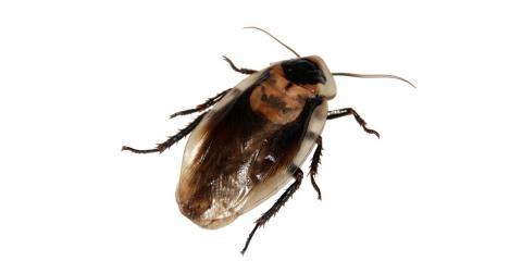 3 Reasons Why Roach Control Is Essential for Hawaii Homeowners, Pahoa-Kalapana, Hawaii