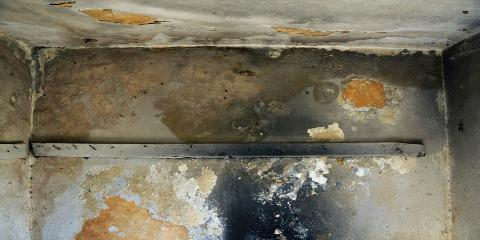 What to Expect When Going Through Mold Remediation, Whitefish, Montana