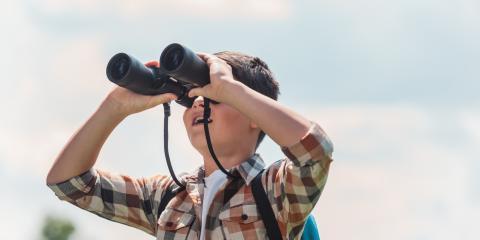 4 Birding Tips for Beginners, 3, Tennessee