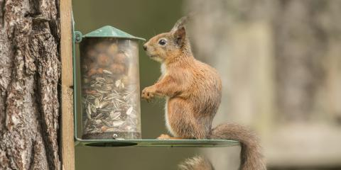 Why Should You Get a Squirrel Feeder?, Lincoln, Nebraska