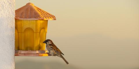The Benefits of Having Bird Feeders in Your Backyard, Jefferson, Missouri
