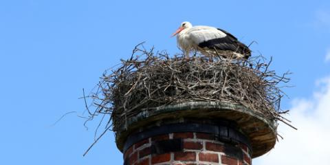 How to Avoid Birds in Your Chimney, Kernersville, North Carolina