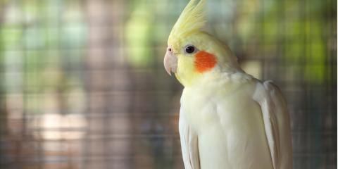 3 Wonderful Pet Bird Species for First-Time & Experienced Owners, Ewa, Hawaii