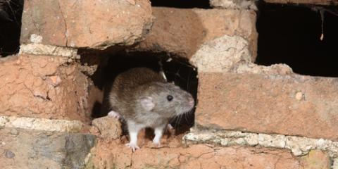 A Guide to Wintertime Pests Calling for Rodent Control, Trussville, Alabama
