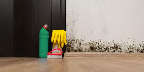 3 Major Dangers of Removing Black Mold by Yourself, Anderson, Ohio