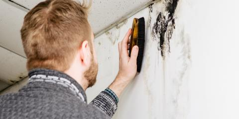 What Causes Black Mold to Form?, Whitefish, Montana