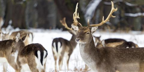 Top 5 Deer Hunting Safety Tips from an Insurance Agency, Black River Falls, Wisconsin