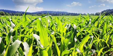 Protect Your Farm From Hail With Crop Insurance, Black River Falls, Wisconsin
