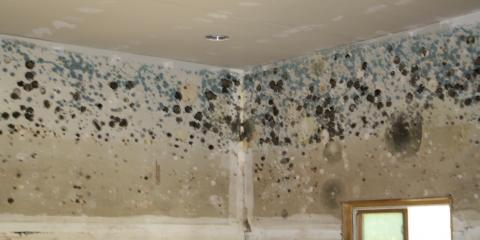 Is a Roof Leak Causing Your Allergies? Schedule a Free Mold Inspection to Find Out, Forest Park, Ohio