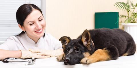 A Veterinarian Recommends 4 Questions to Ask About Your New Pet, Honolulu, Hawaii
