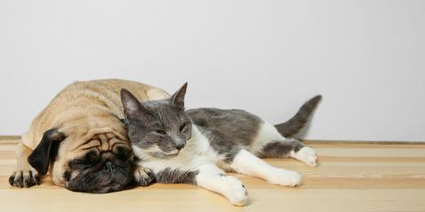 5 Reasons to Spay & Neuter Your Puppies & Kittens, Honolulu, Hawaii