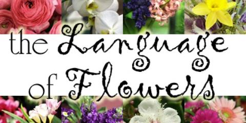 Do you know the language of flowers?, Lakeville, Connecticut