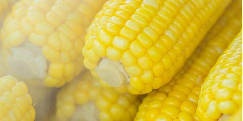 Sweet Corn  - $1.50 doz. While Supply last!, Byron, Wisconsin