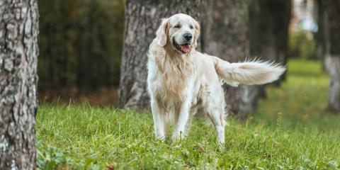 4 Common Questions Pet Owners Have About Boarding, Churchville, New York