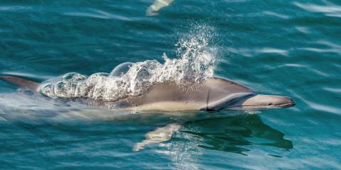 What Should I Bring on My Honolulu Dolphin Boat Tour?, Honolulu, Hawaii