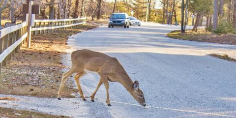 Cincinnati Body Shop Shares 5 Steps to Take After Hitting a Deer, Cincinnati, Ohio
