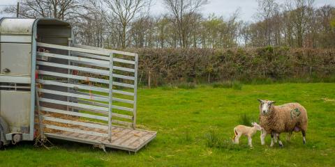 3 Livestock Trailer Safety Tips for Trouble-Free Transport, Bolivar, Missouri