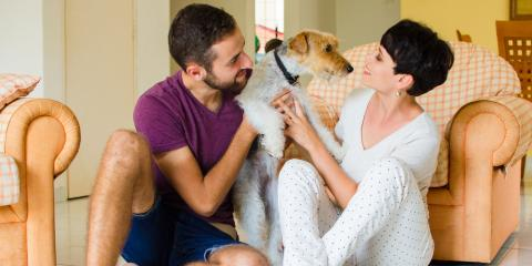 5 Tips for Maintaining Your HVAC System as a Pet Owner, Bolivar, Missouri
