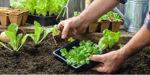 When to Use Topsoil & Mulch in Your Garden, Burlington, Kentucky