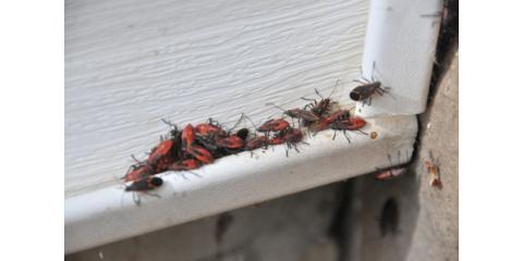 Pest Of The Week, Amelia, Ohio