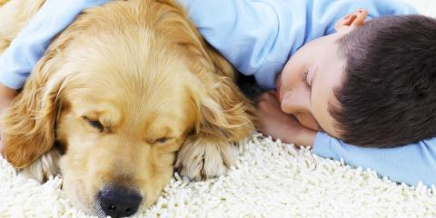 Learn About Safe-Dry of Cincinnati's Top-Quality Pet Odor Removal Services, West Chester, Ohio