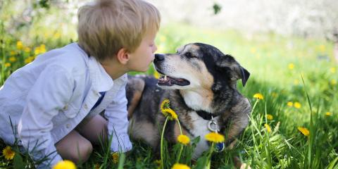 How to Talk to Your Children About a Pet's Death, Atlanta, Georgia