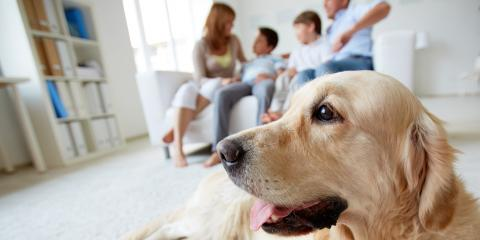 3 Carpet Cleaning Tips for Pet Owners, Branson, Missouri