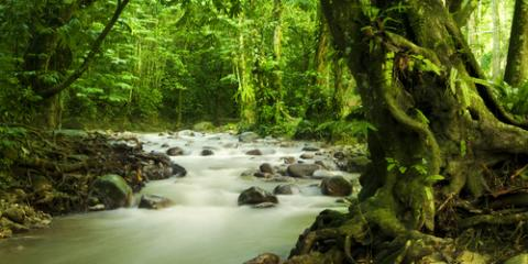 Why is the Amazon Rainforest Important? , Honolulu, Hawaii