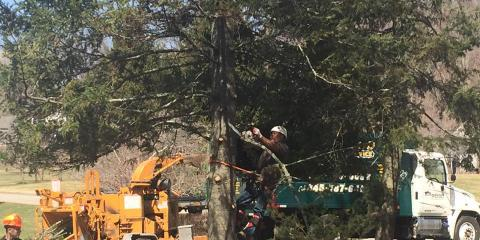 How to Find the Best Tree Service Company, Brewster, New York