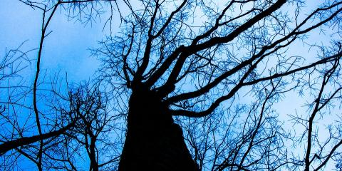5 Signs It's Time for a Tree Pruning From Osorio Tree Service, La Grange, New York