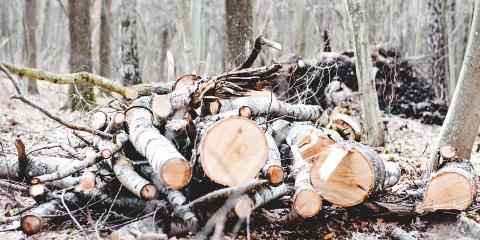 3 Essential Pieces of Equipment for Splitting Wood Safely, West Bridgewater, Massachusetts