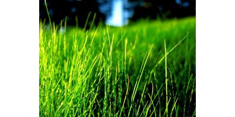 Improve The Appearance of Your Lawn With Aeration From Brockman Tree & Lawn Care, Perinton, New York