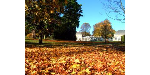 Get Your Fall Clean Up Lawn Service From Brockman Tree Care Perinton
