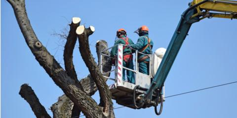 3 Reasons to Schedule a Residential Tree Service in Early Spring, Broken Arrow, Oklahoma