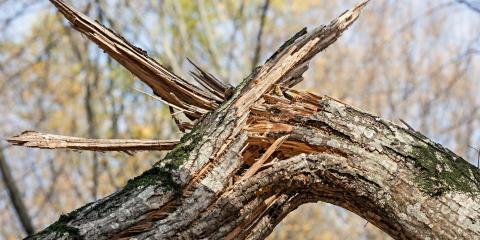 5 Steps for Successful Storm Damage Restoration, St. Augustine, Florida