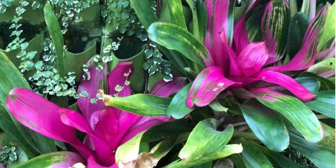 3 Tropical Flowers That Can Grow at Home, ,