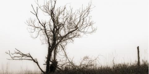 5 Symptoms of an Unhealthy Tree, Explained by the Bronx's Top Tree Service, ,