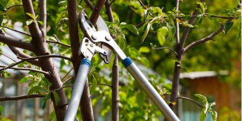 Top 3 Tree Trimming Benefits, ,