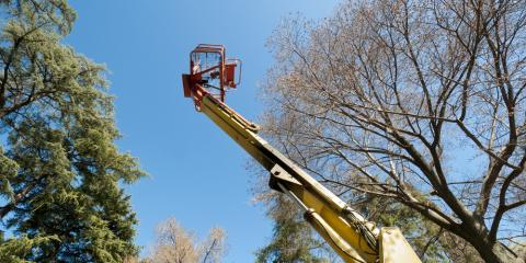3 Reasons to Leave Tree Service to the Professionals, ,