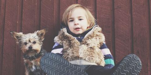 How to Choose Pet- & Child-Friendly Carpet, Brooklyn, New York